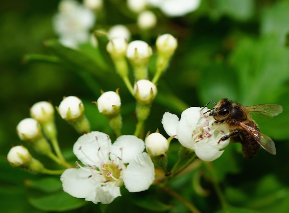 image of a bee pollenating an apple tree flower, representing the nurturing of the marketing visualization