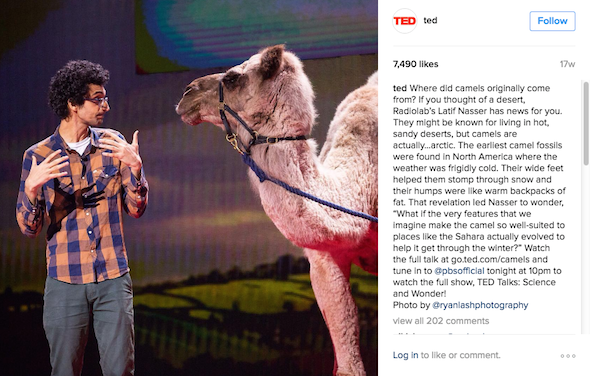 instagram guest speaker with camel